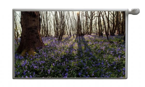 BLUEBELL WOOD Magnetic Radiator Cover